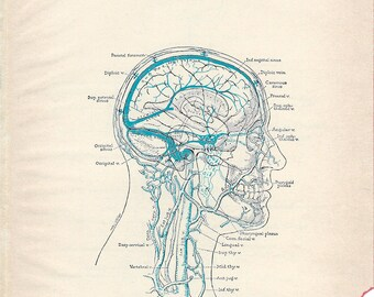 Human Anatomy Veins of the Head and Neck & Principal Veins of the Body Medical Anatomy Illustrations to Frame or for Paper Arts PSS 0117