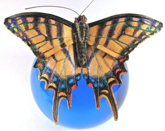 Leather Two-Tailed Tiger Swallowtail butterfly brooch