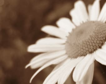 Flower Photo Daisy Neutral Photography Soft Petals Home Decor 5x7 Signed Art Print
