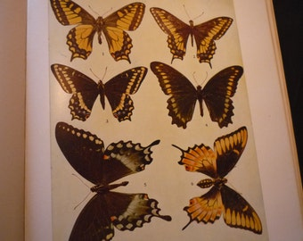 Butterflies - 3 color plates - 1945 color plates - set of three - browns and yellows - vibrant color prints - framable W J Holland