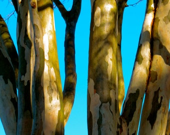 Blue Sky Tree, Sydney