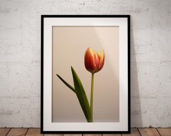 Tulip | Botanical | Flower | Photo Print