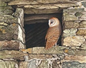 Barn Owl in Stone Window ...