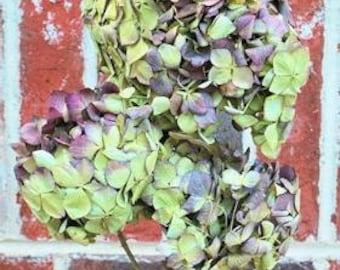 Dried Burgandy Hydrangea | Burgandy Flowers | Wedding Flowers | Rustic Flowers