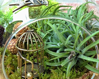 Swallow and Bird Cage Air Plant Terrarium - A Perfect Birthday or Mothers Day Gift