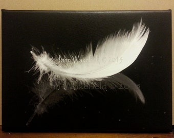Swan Feather- Reflection
