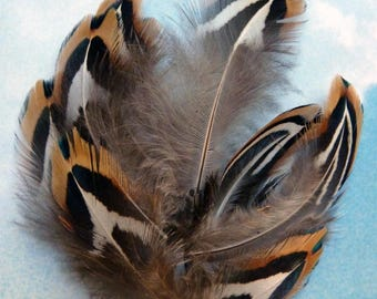 Small natural light Tan pheasant feathers
