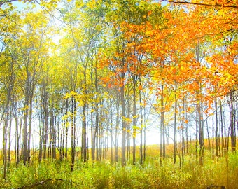 Panoramic Fall Trees on Canvas