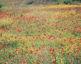 Red Yellow Flower Photography - Israel Travel Photography - Spring Wildflowers - 5x7 Fine Art Photograph