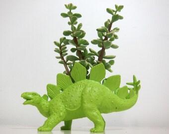 Stewart the Stegasaurus Planter & Succulent