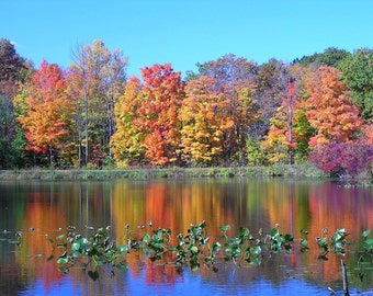 Fall Decor 5x7 Autumn Pond Reflection Landscape and Nature Color Print Home Decor