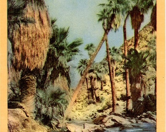 Palm Canyon Palm Springs California Vintage Postcard 1940s (unused)