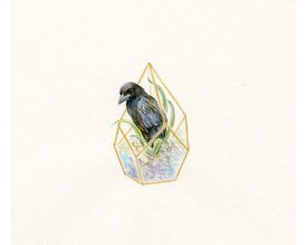 "Original miniature Artwork - ""Crow in Geo Terrarium"" - bird corvid crow raven watercolor colored pencils painting drawing"