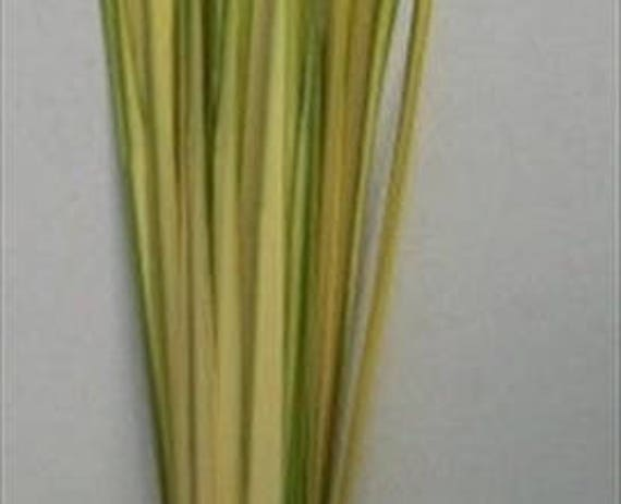 Fresh Palm Bud, Fresh Palm Branches