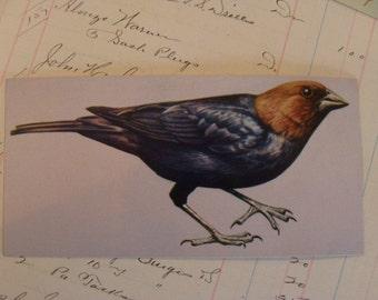 6 Vintage Antique Bird Flash Card Lot