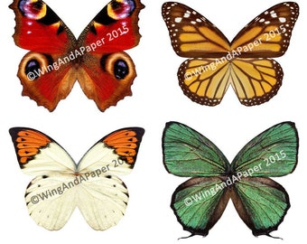 Printable Paper Butterfly Wings for Kids - Group of 4 Natural Species