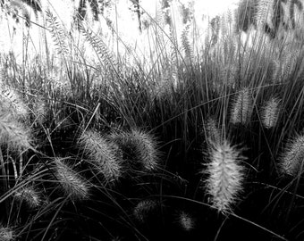 Flesh is grass I - original black and white photography one-time unique print on canvas
