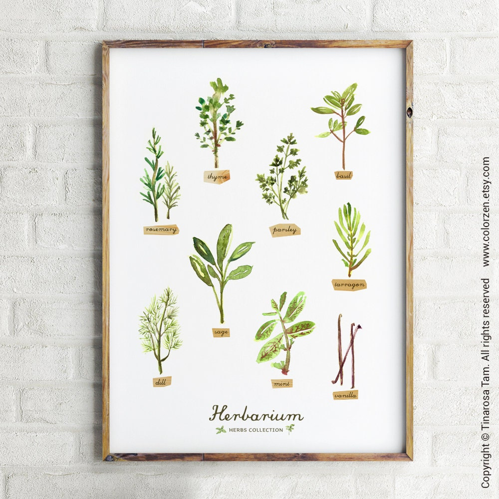 Kitchen Herbarium Art: Kitchen Print Herb Watercolor Painting Herb Chart Kitchen Art
