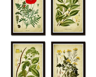 Set of 4 Green Plant Prints, Antique Botanical Green Art Posters, Botanical Decor, Plant Book Plate Illustration, green room decor *24*
