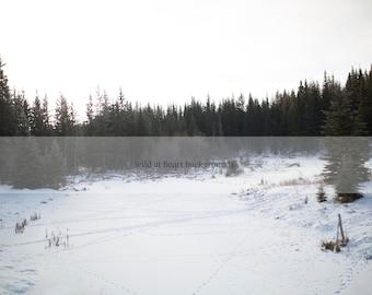Maple Creek Winter Digital Background