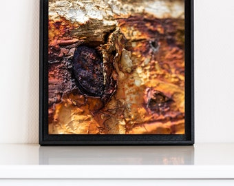 Détail d'une vieille coque, tirage d'art contrecollé sur Alu-Dibond et monté en caisse américaine