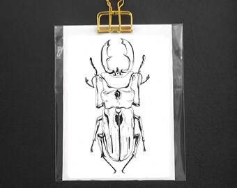Insect postcard - Beetle