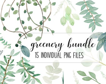Spring Greenery bundle of seeded eucalyptus, vines, and olive foliage Watercolor .png  | graphics | clip art | INSTANT DOWNLOAD