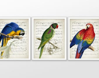 Parakeet And Parrot Vintage Art Set Of 3 - Rose-Ringed Parakeet - Macaw Parrot - Scarlet Macaw - Music Sheet Art #2348 - INSTANT DOWNLOAD