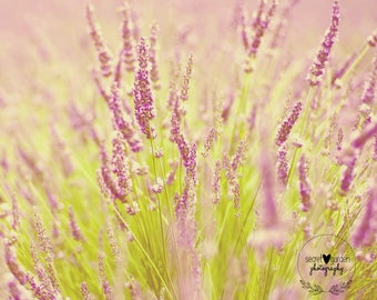 provence photography print, landscape photo, lavender wall art, home decor, french style, travel, fine art photography, purple, lensbaby