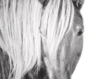 Wild Horse with great hair - 11x14 Black and White Minimal Animal Photography Print
