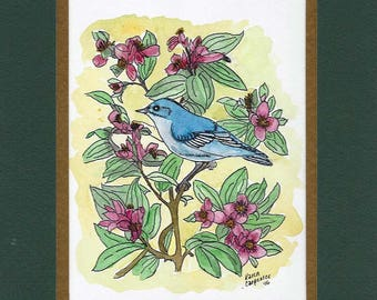 """Original Pen Ink and Watercolor Painting of A Mountain Bluebird Perched Among Japonica Flowers with 10"""" x 8"""" Mat"""