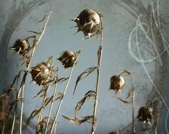 Funestes-3 - 8x10 (20 x 27 cm) Fine Art Photograph
