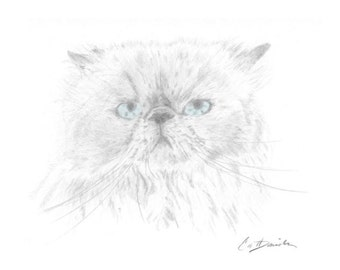"Himalayan Cat Pencil Drawing Original Hand Drawn Art 8.5"" x 11"" Print Mother's Day Gift Birthday Present Cat Lovers Cat Portrait CatDKnits"
