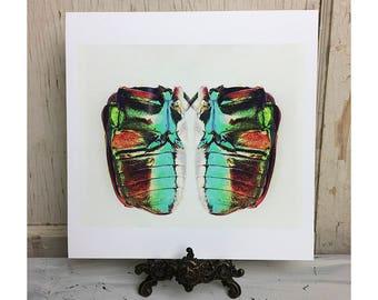 Beetle, fine art photography, print