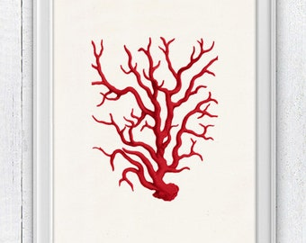 Red coral - Antique Illustration , sea life print- Marine  sea life illustration A4 print SWC022