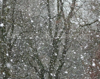 Snow Photography / Winter Photograph / Printable Photo Digital Download Wall Art /  Snowstorm, Blizzard, Snowflakes / High Resolution Print