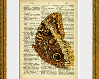 GOLDEN MOTH recycled book page art print - an upcycled antique dictionary page with retooled antique bird illustration - home decor