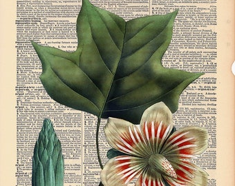 """Vintage Antique Dictionary Page with Antique Print """"Tulip Tree Leaves"""""""