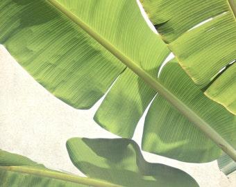 Banana Leaves Print - Botanical Print - Green White Wall Art - Tropical Home Decor -  Living Room Wall Art - Green Banana