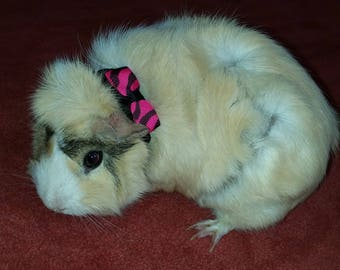 Guinea pig leash etsy 58 wide paracord guinea pig collar publicscrutiny Image collections