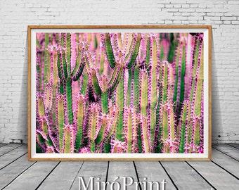 Impression de cactus Cactus Wall Art, Photo Cactus, rose et vert, décor à la maison, Photo du désert, grande murale, Art, affiche minimaliste, Western Art déco