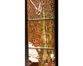 Magnet Set Winter Aspen 5.25 in x 1.75 in