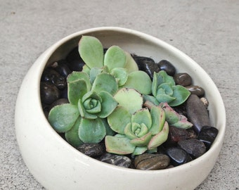SUCCULENTS - to pair with planter