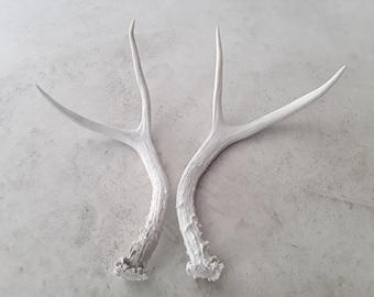 set of genuine natural real deer antlers decorative design decor crafts art centerpiece gift rustic antler wedding