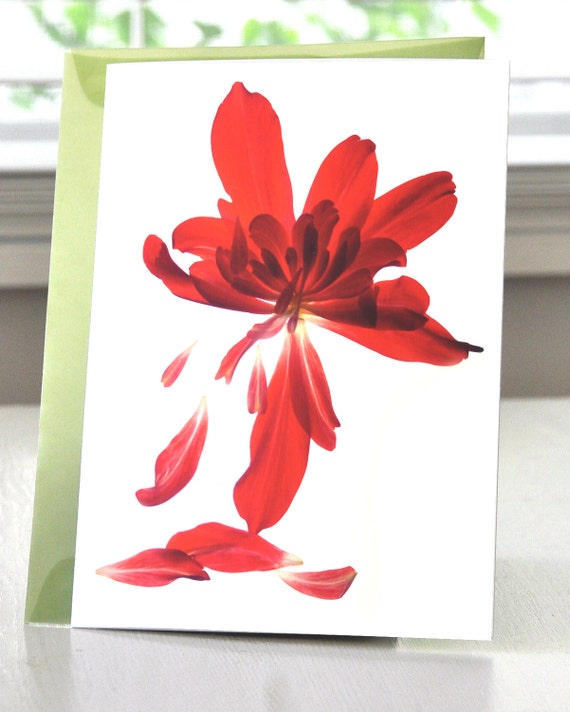 Note Card--Floral Card---Begonia Array--Two Sizes