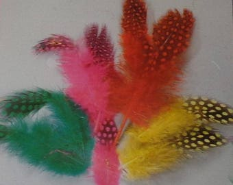 36 feathery fowl (green, pink, red, yellow)