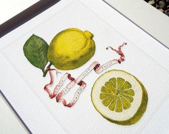 Botanical Lemon Naturalist Study 2 Archival Print