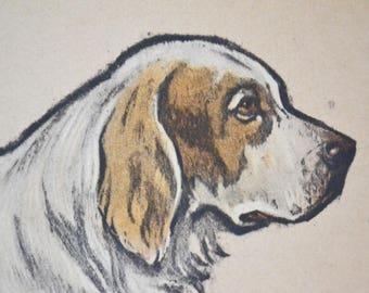 Dog engraving, original, Clumber, 1937, vintage, brown
