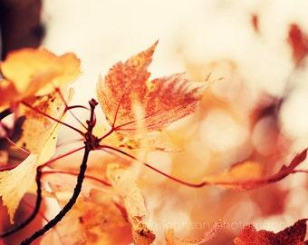 landscape photography autumn leaf decor orange decor fall photograph woodland art nature photography fall decor