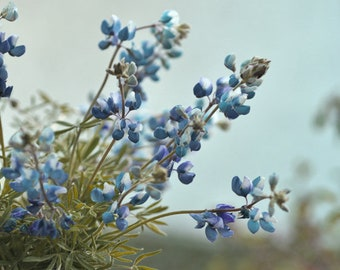 Bluebonnet wall art Texas floral print, purple blue flower photo print, country rustic farmhouse bedroom bathroom decor wildflowers wall art